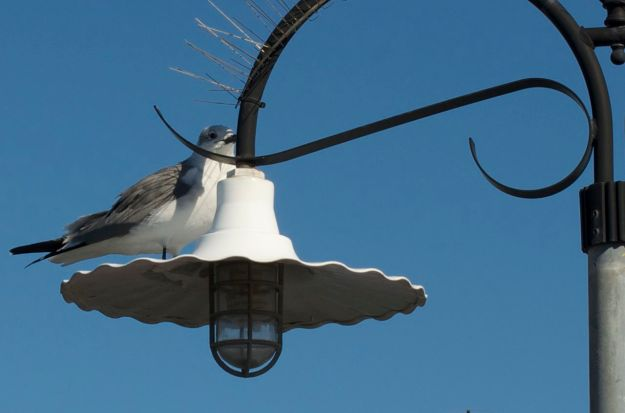 little bird on the boardwalk