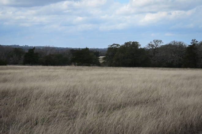 hay field on Sun Oil Rd