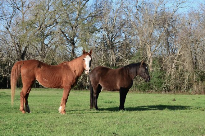 Lilly and Lonestar