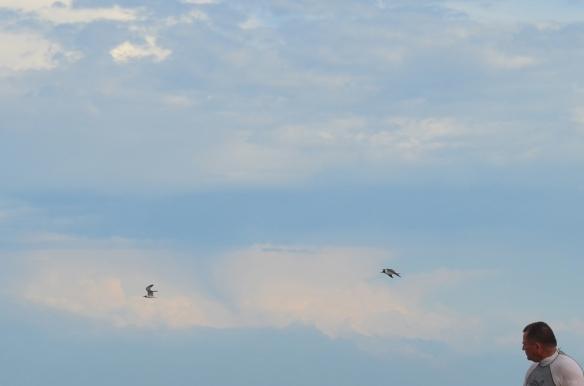 JBM seagulls