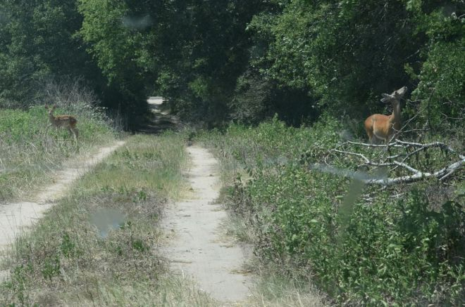 Fawn and Doe on the Otto Bahn