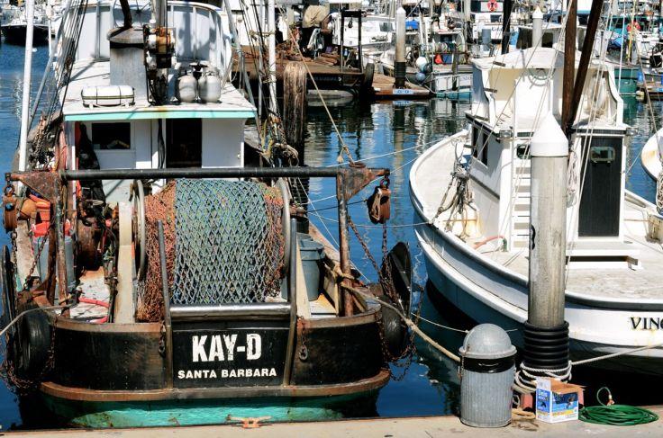 Kay D SB