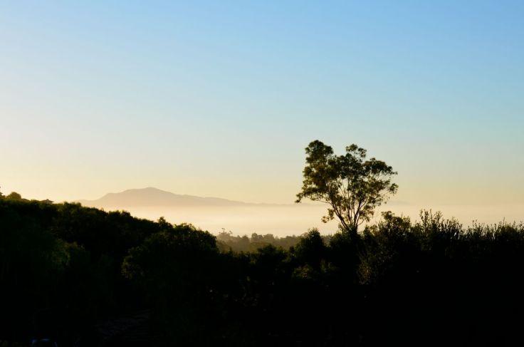 morning fog from Las Alturas Road