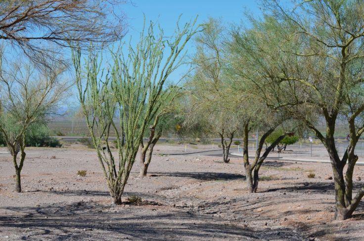rest area 60 miles outside Phoenix