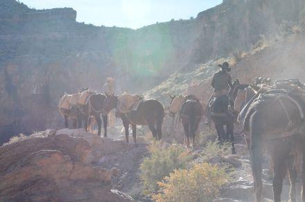 mules at halfway rear view