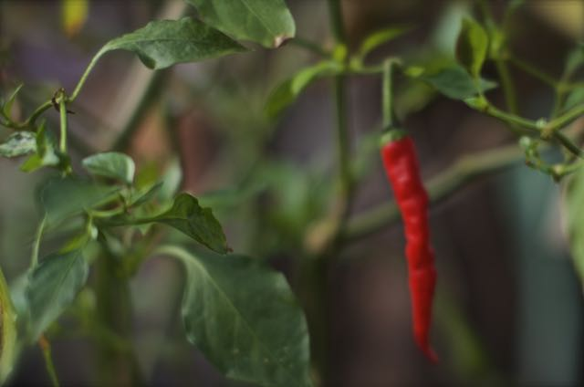 Cayenne almost