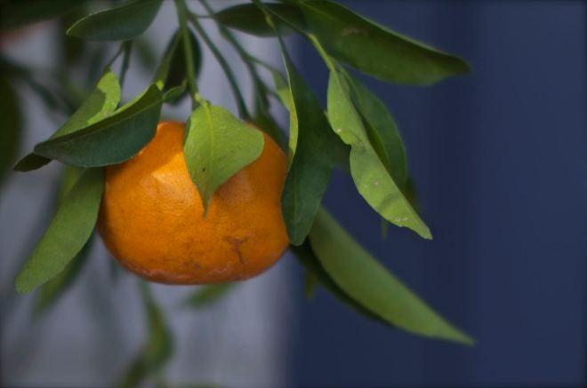 Tangerine almost