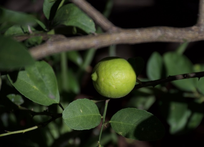 Last of the Limes