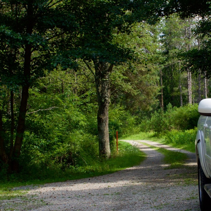 Road to the Old Beaver Damn and Hatchery