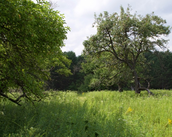 The Old Orchard in Pigeon