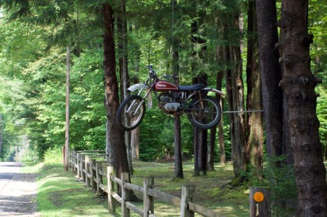 Yamaha hanging in tree
